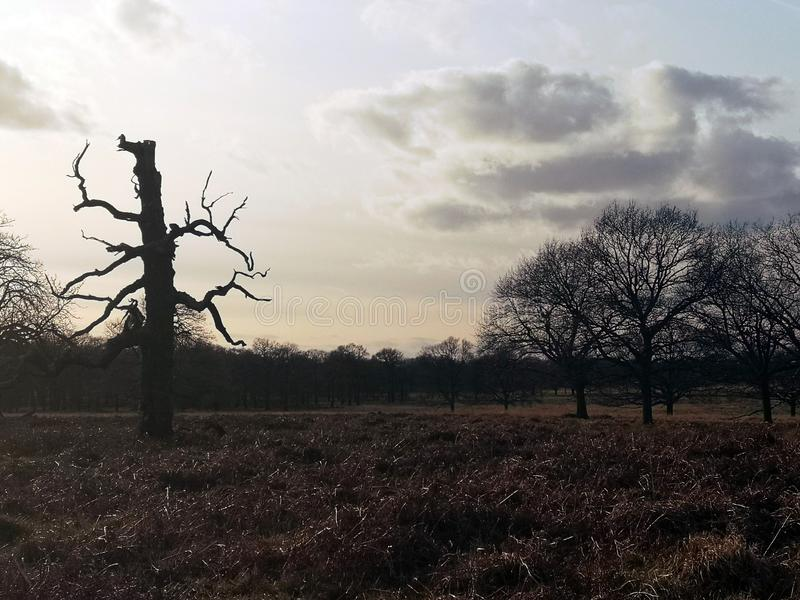 Richmond Park London, F?renade kungariket royaltyfria foton