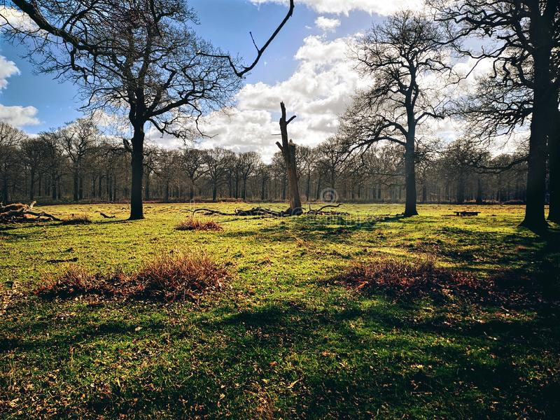 Richmond Park London, F?renade kungariket fotografering för bildbyråer