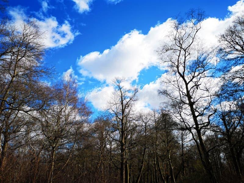 Richmond Park, London, Vereinigtes K?nigreich lizenzfreie stockbilder