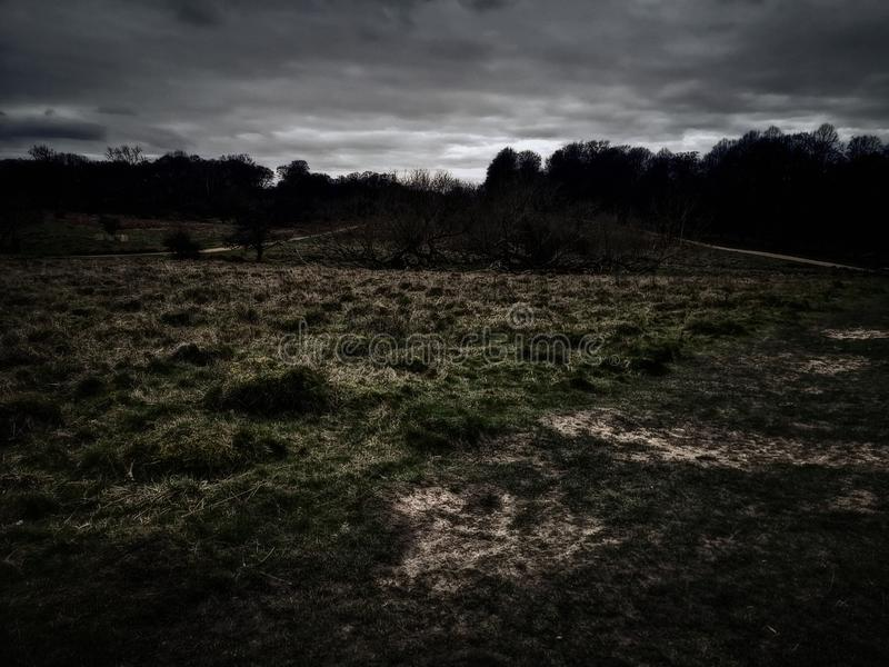 Richmond Park, Londres, Royaume-Uni images libres de droits