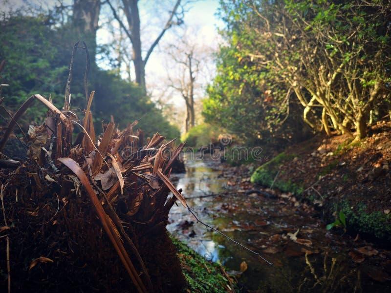 Richmond park, Londyn, Zjednoczone Królestwo fotografia stock