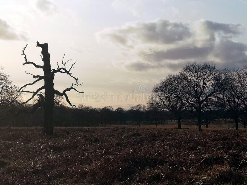 Richmond park, Londyn, Zjednoczone Kr?lestwo zdjęcia royalty free