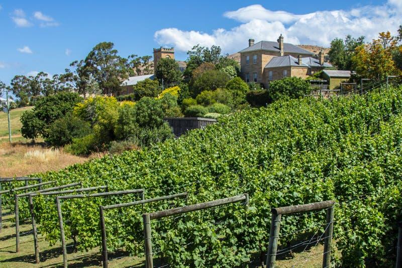 Pretty vinyard and winery on a hill. Richmond, Tasmania, Australia - December 21, 2016: Richmond vinyard and winery royalty free stock photography