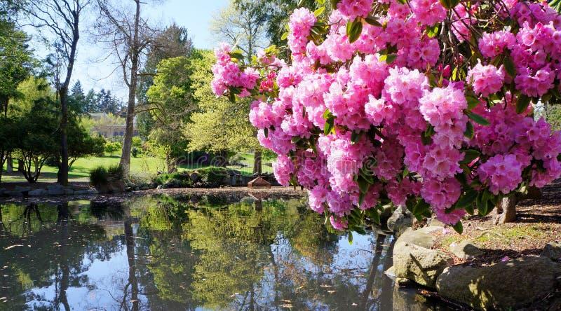 Richt het park van de Uitdagendheid in Tacoma, WA. De V.S. Doorboor rododendron dichtbij vijver. royalty-vrije stock foto's