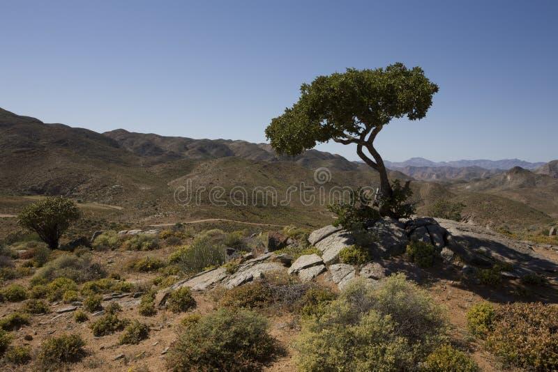 Richtersveld National Park, South Africa. royalty free stock photo