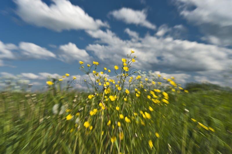 In Richtung zur Natur! lizenzfreies stockfoto