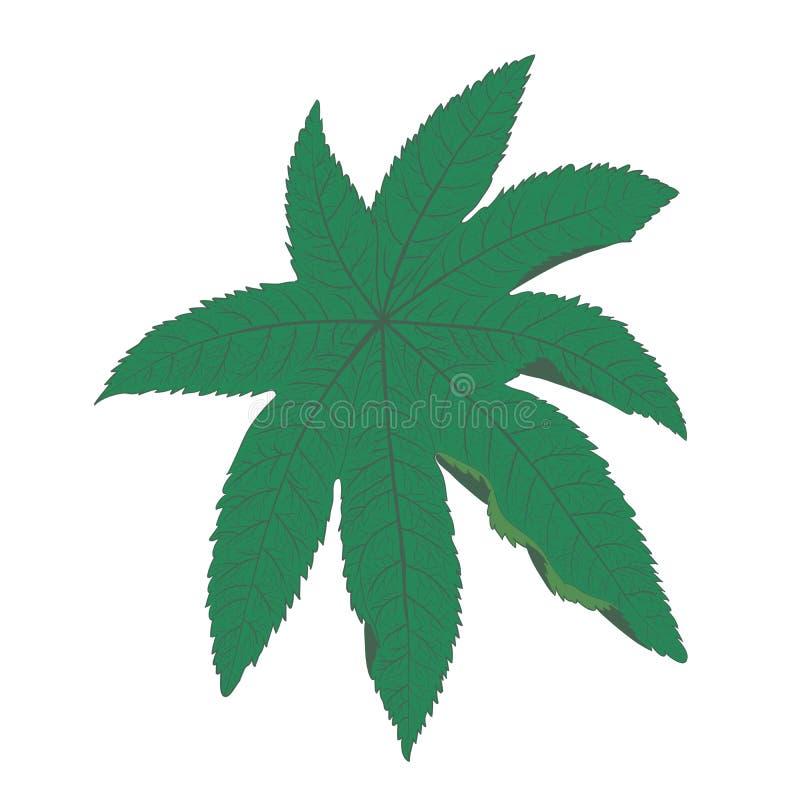 Ricin leaf illustration royalty free stock photos