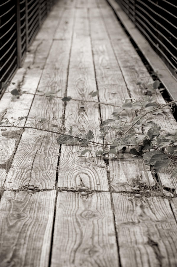 Free Rickety Bridge Royalty Free Stock Photography - 10932317