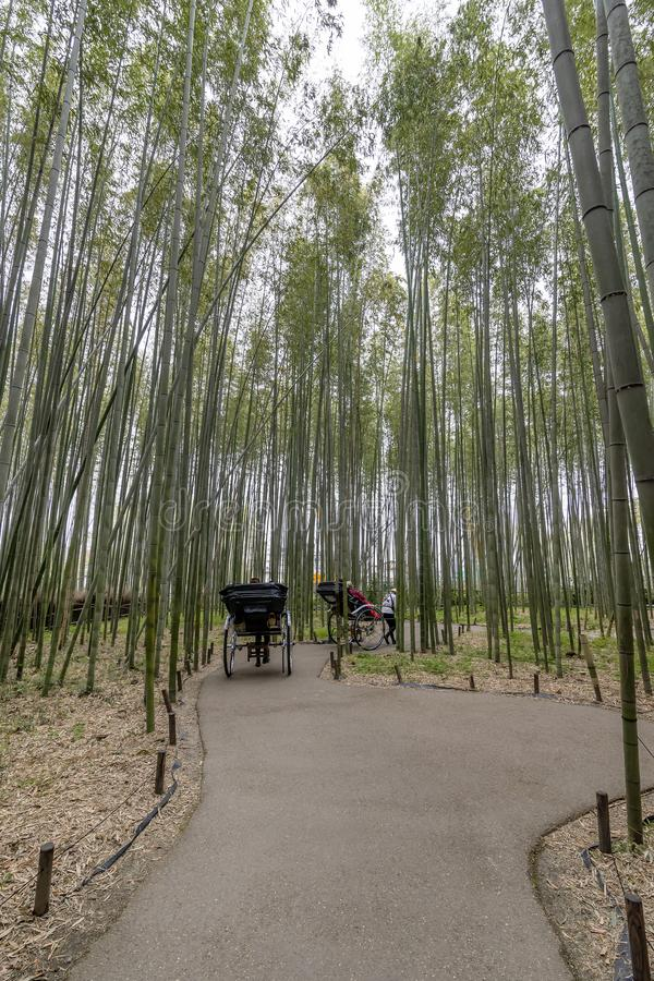Rickshaw inom bambuskogen av Arashiyama, Kyoto, Japan arkivbilder