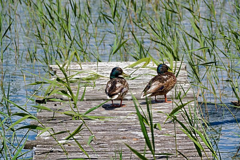 Ricreazione degli uccelli sull'ancoraggio immagine stock
