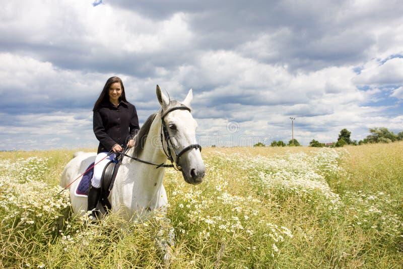 rid- hästrygg royaltyfri bild