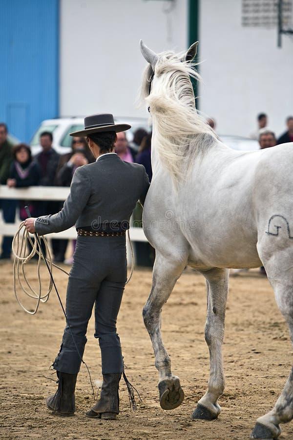 Rid- prov av morfologi till rena spanska hästar royaltyfri foto