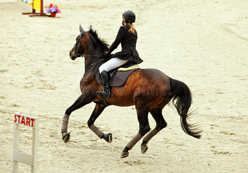 Rid- ridninghäst på en sportutbildning arkivbild
