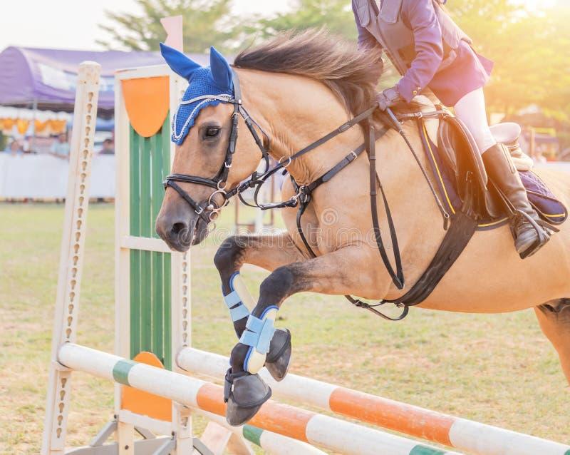 Rid- ryttarehäst som hoppar över häckhinder under dressyrprovkonkurrens arkivbild