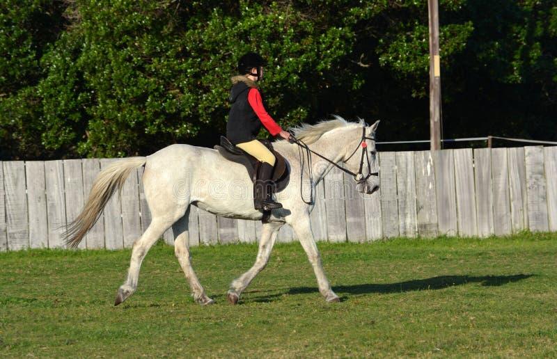 Rida att trava på grå häst royaltyfria foton