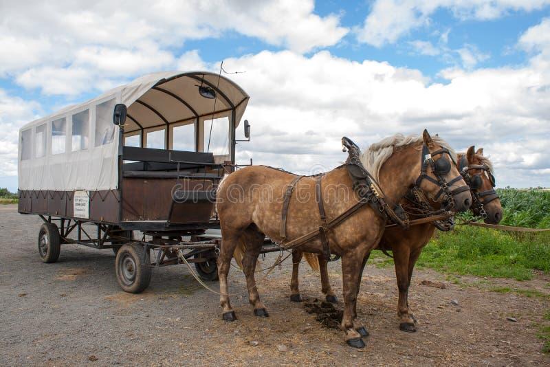 Rida till och med de flemish fälten med hästen och den dolda vagnen. arkivfoton