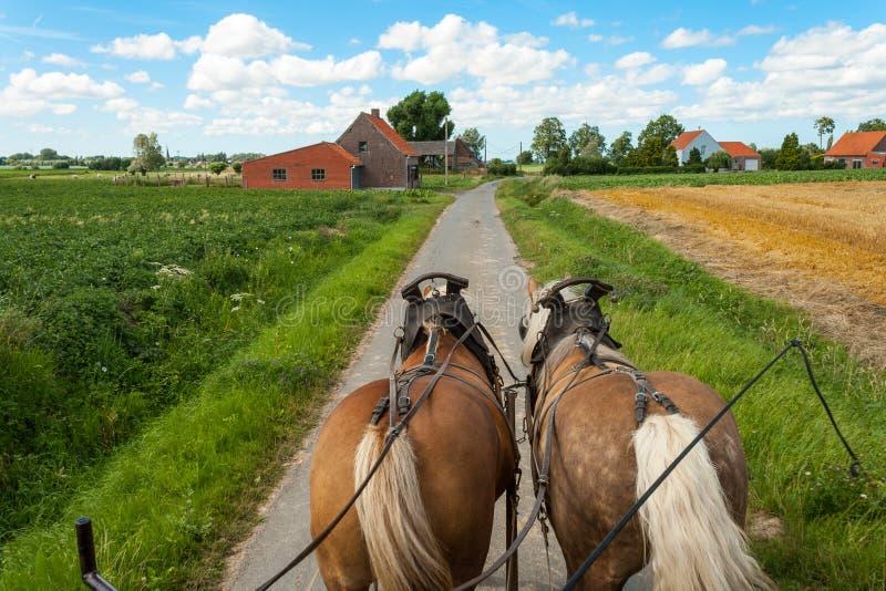 Rida till och med de flemish fälten med hästen och den dolda vagnen. royaltyfri bild
