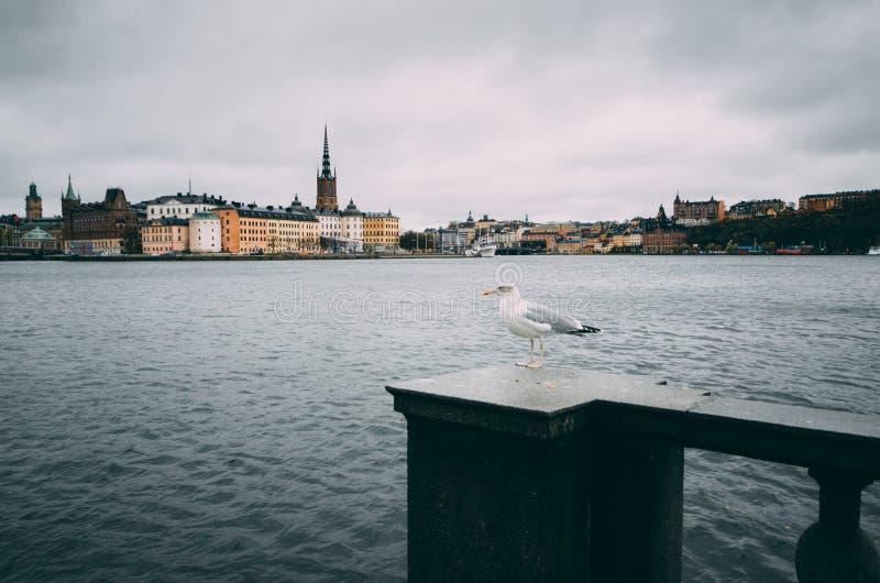 Riddarholmen in Stockholm lizenzfreie stockfotografie