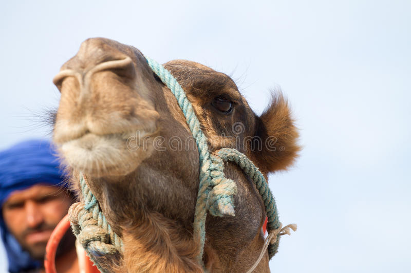 Ride On The Camel Stock Photography