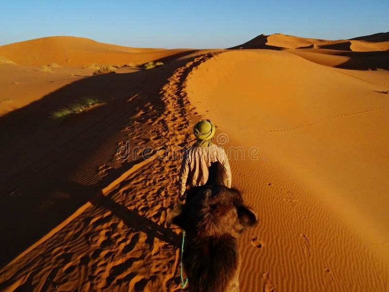 Ride on the camel in Merzouga desert royalty free stock photography