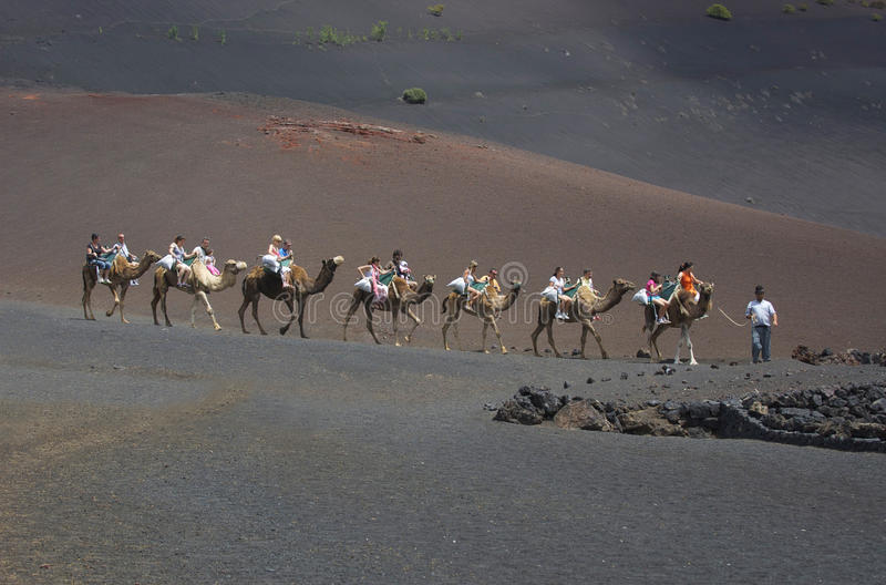 Download Ride With Camels On Lanzarote Editorial Photo - Image: 21352556