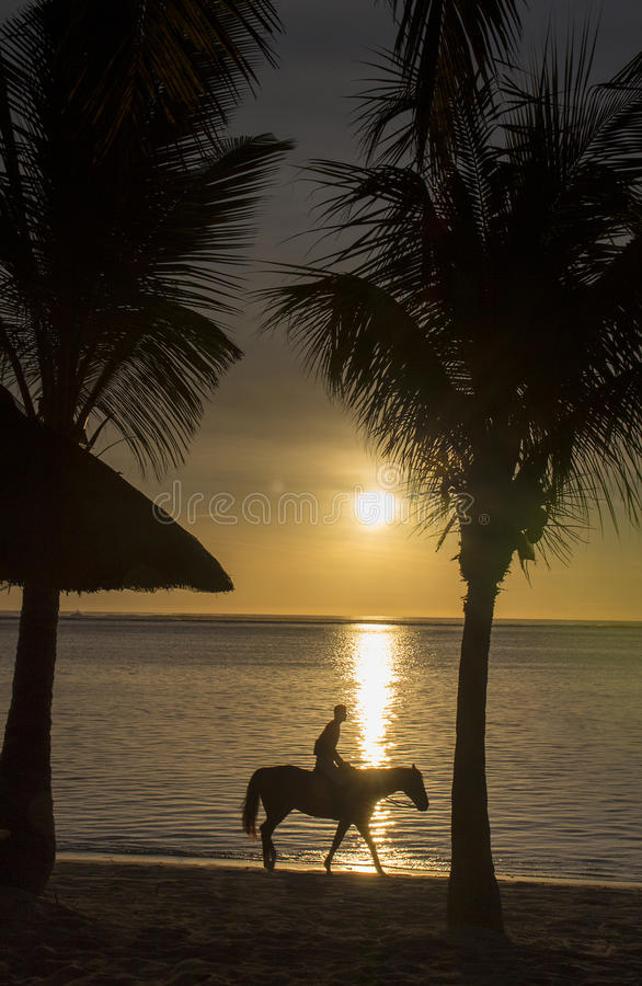 A ride at sunset. Palm trees and horse rider silhouetted against the ocean at sunset royalty free stock images