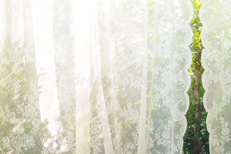 Rideau blanc avec la vue de fenêtre/le fond jardin d'arbre photo libre de droits