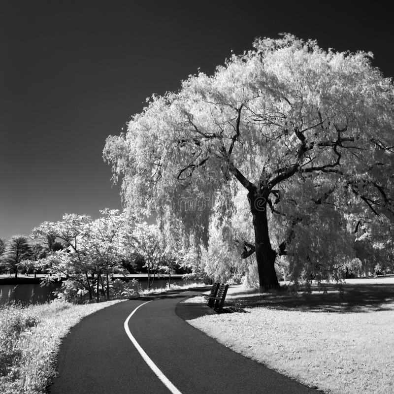 Rideau canal in infrared