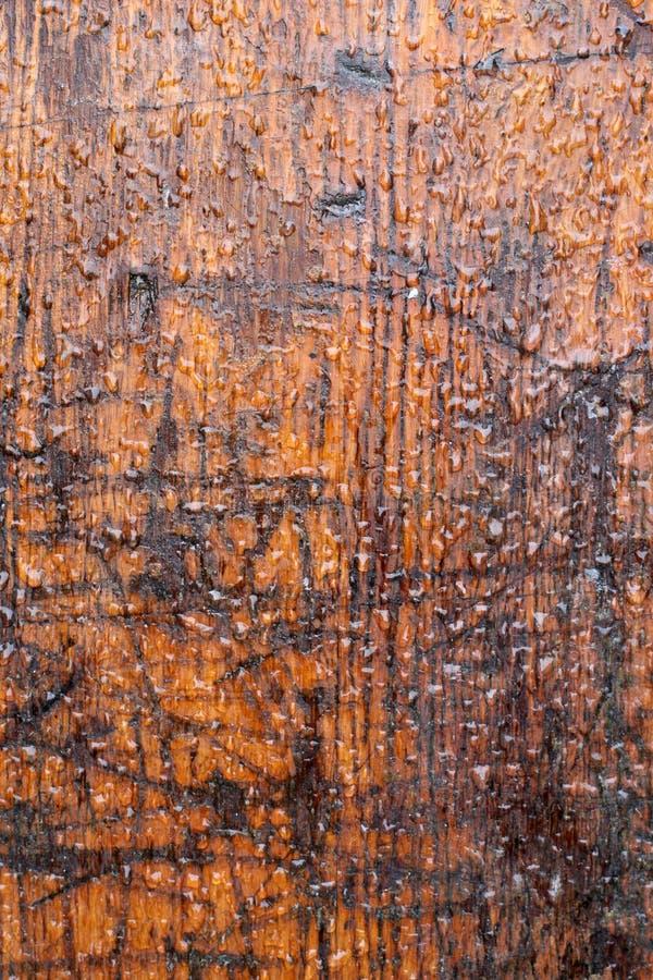 riden ut brun timmer arkivbilder