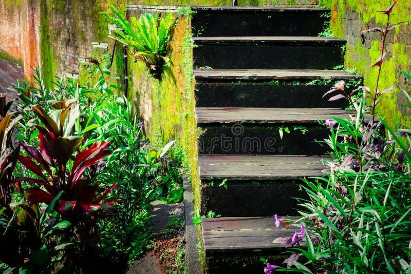 Riden ut trätrappa av det övergav tropiska huset royaltyfria bilder