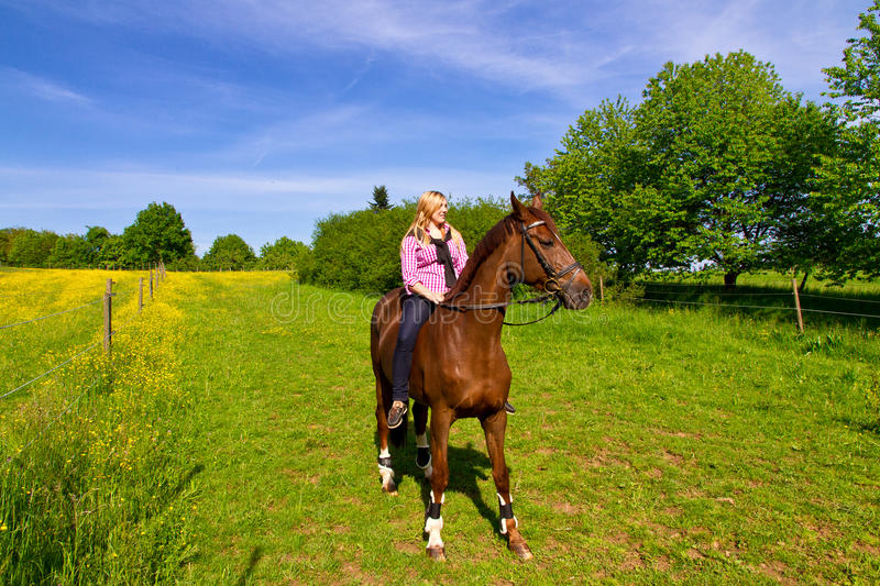Download Rider stock image. Image of practicing, field, purebred - 25415439