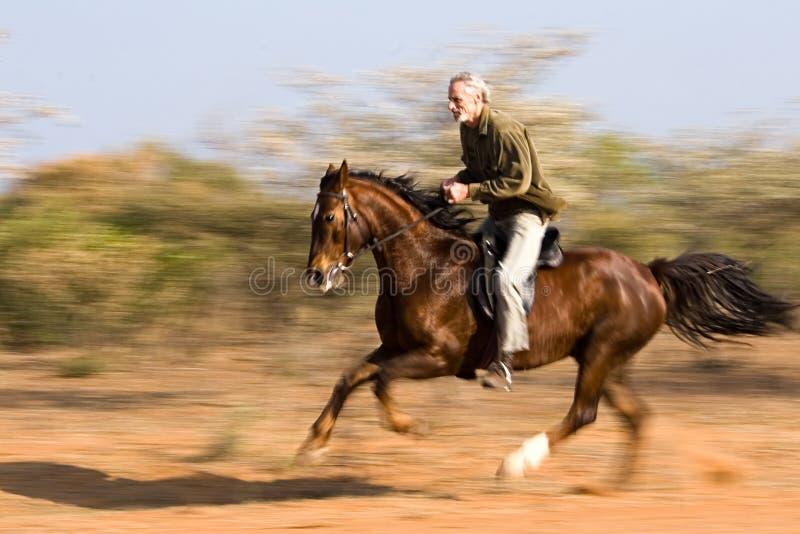 Rider stock photography