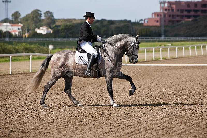 Rider competing in dressage competition classic royalty free stock photos