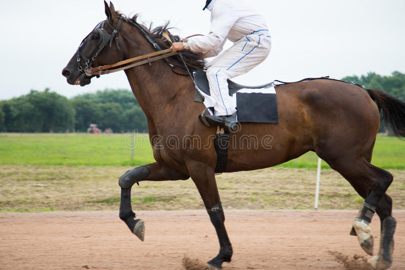 Rider on a high jump competition. A horsewoman ready for a equestrian competition stock images