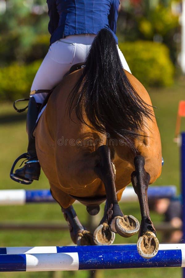 Rider Horse Jumping Closeup Rear Hoofs stock fotografie