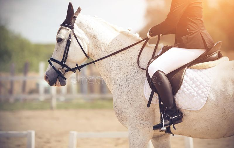 The rider riding a white horse performs at dressage competitions. The rider, illuminated by sunlight, riding a white spotted horse performs at dressage royalty free stock images