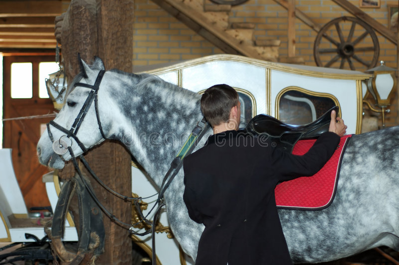 Download Rider Tightens A Saddle-girth Stock Photo - Image of countryside, dressage: 5043774