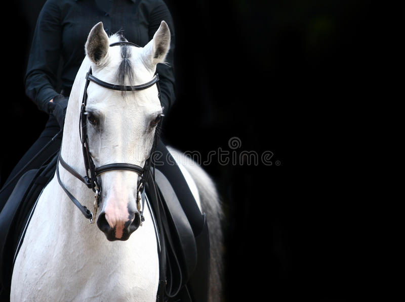 Download Rider on white arab stock image. Image of flame, fast - 10659889