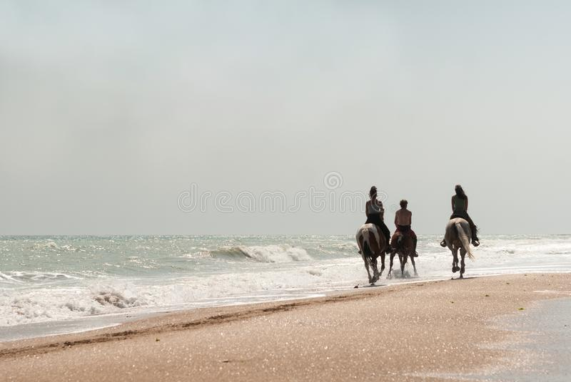 Riders on the horses stock images