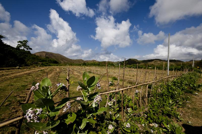 A ridgehill with blue sky above and beautiful flowers 2on foreground stock images