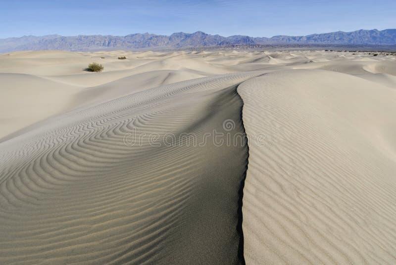 Ridgeline en la duna ondulada fotos de archivo libres de regalías