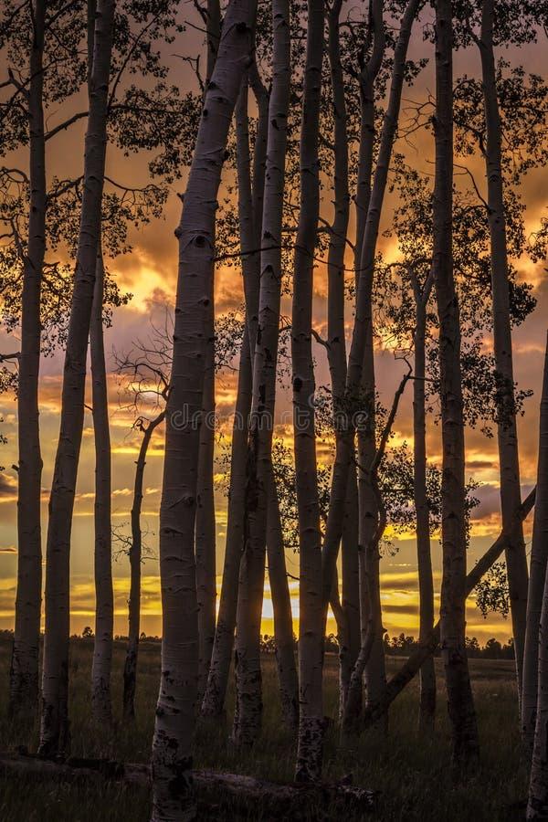 RIDGWAY, COLORADO - Espen bij Zonsondergang, Hastings Mesa Colorado dichtbij Mooie boomstam, royalty-vrije stock afbeeldingen