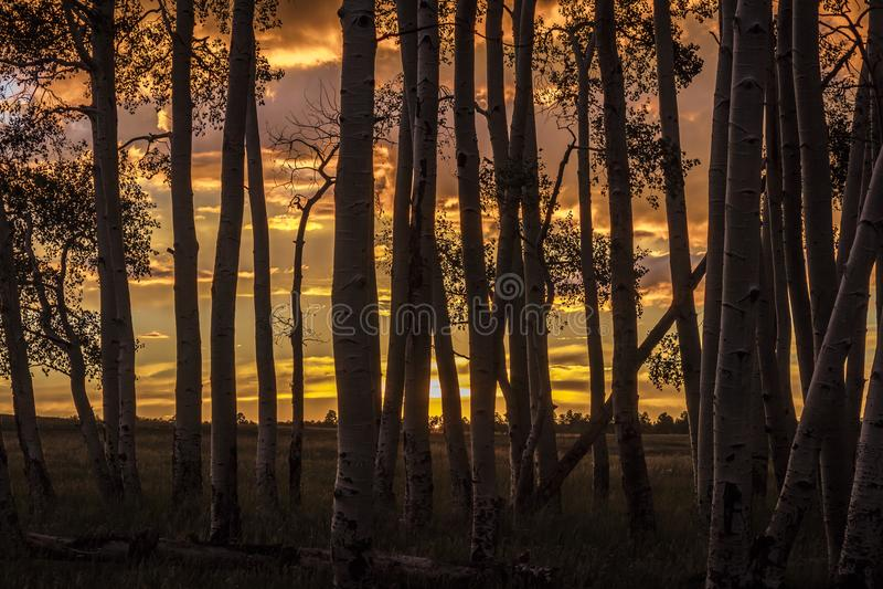 RIDGWAY, COLORADO - Espen bij Zonsondergang, Hastings Mesa Colorado dichtbij Vage aard, stock foto