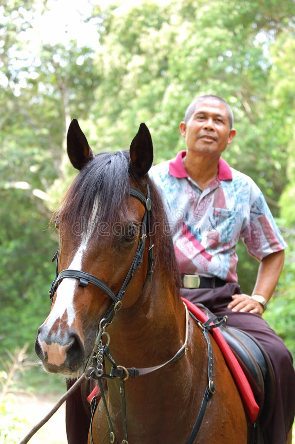 riding лошади стоковые фотографии rf