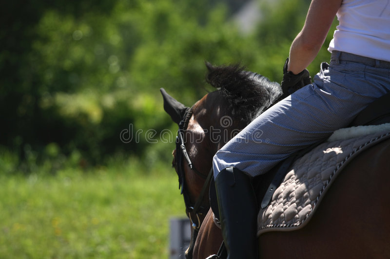 Download Riding 2 stock image. Image of bridle, mane, horse, rider - 5614423
