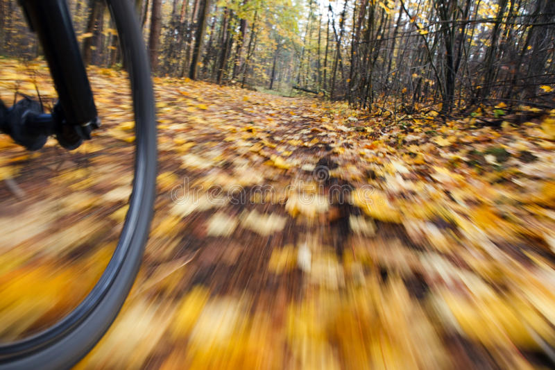 Riding bicycle. Abstract motion blur. royalty free stock photo