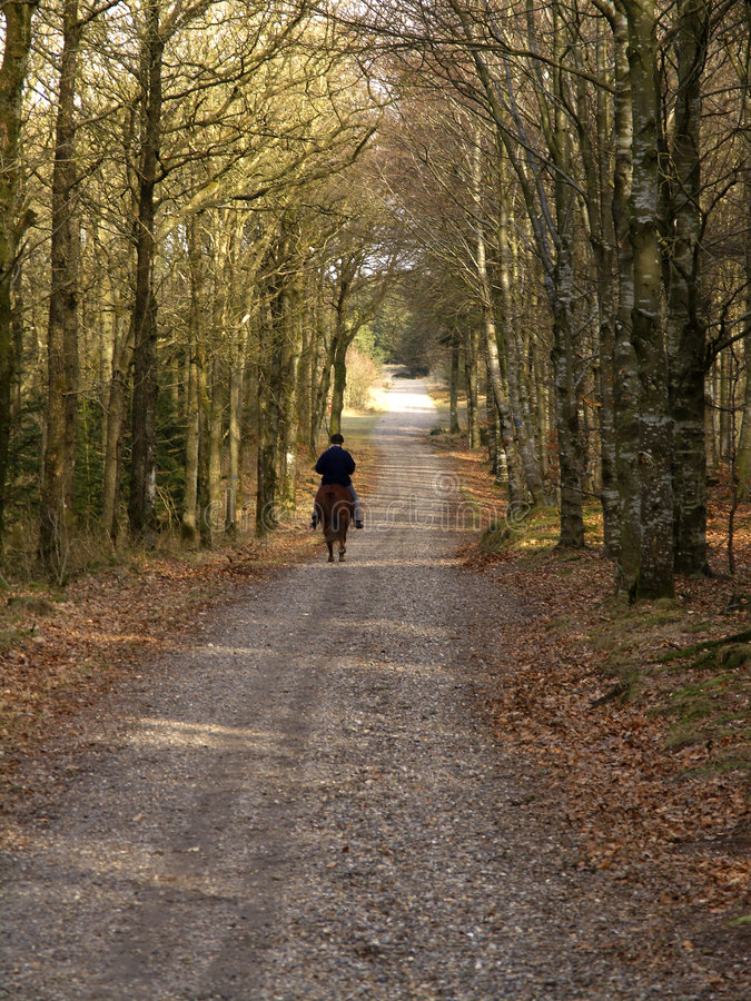 Download Riding in the forest stock image. Image of riding, path - 69455