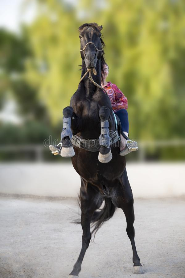 Riding girl and horse royalty free stock photo