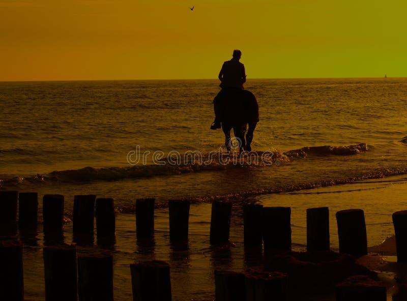 riding horseback пляжа стоковая фотография rf