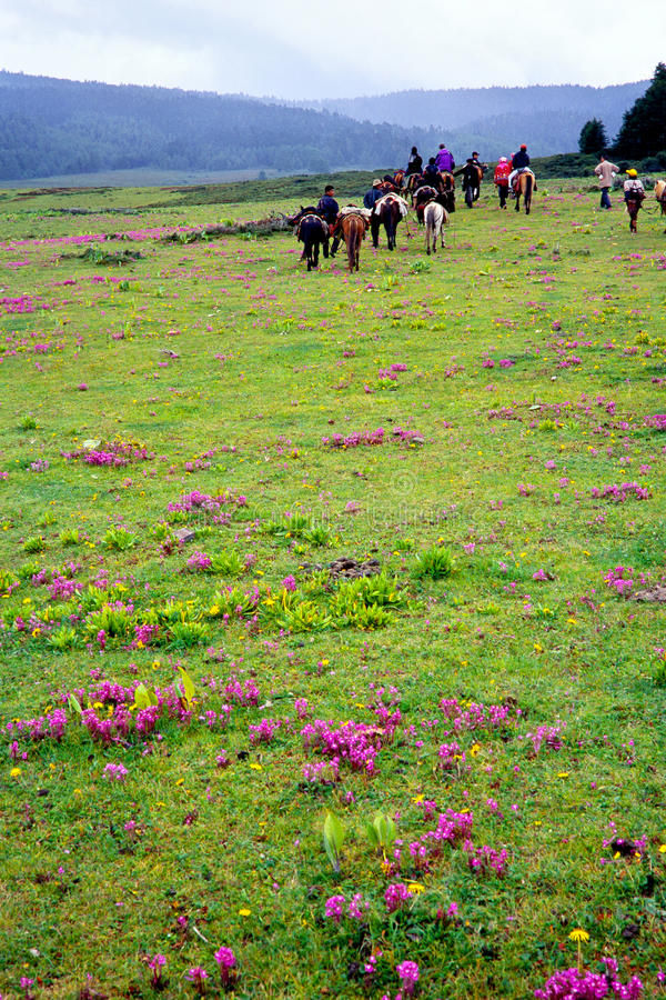 Riding horses in grassland